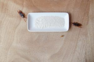 Roach bait lure trap get rid of roaches on wooden background.