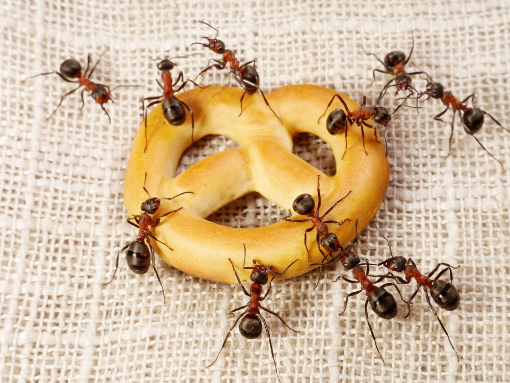 A group of ants are eating a cake.