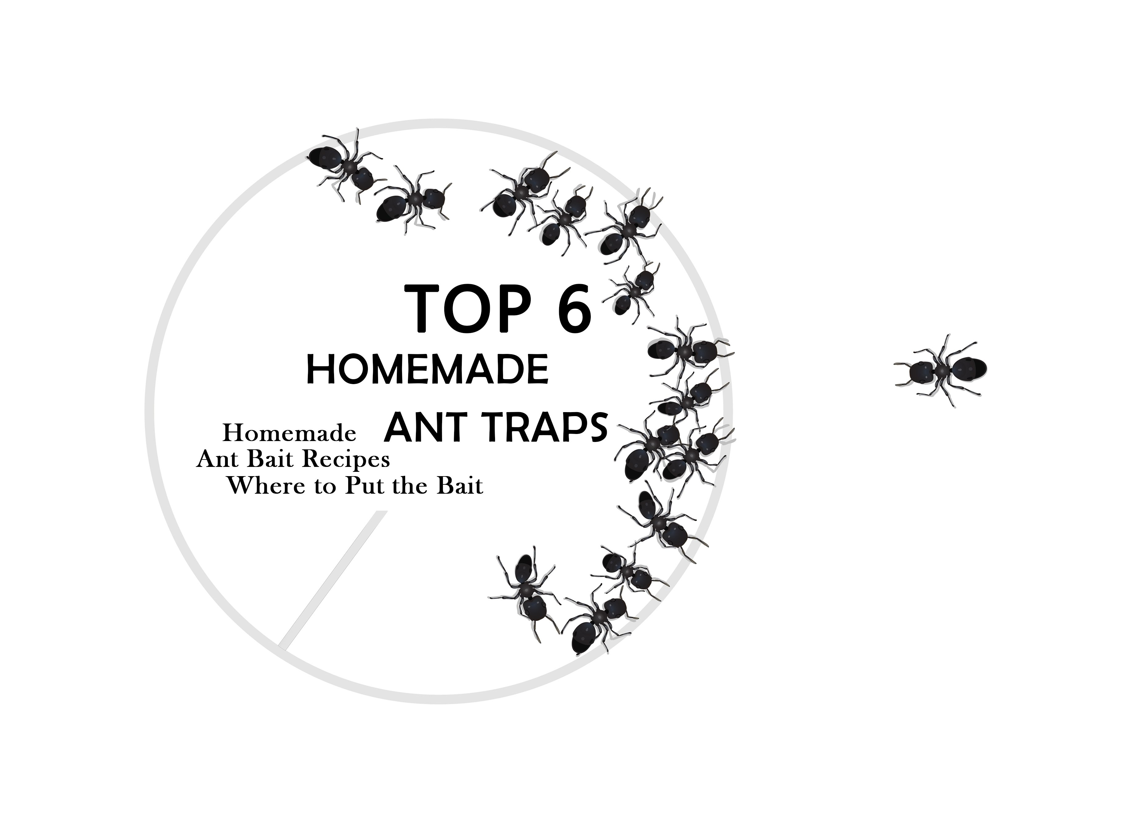 DIY Homemade Ant Traps