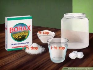 Using borax and sugar to kill ants