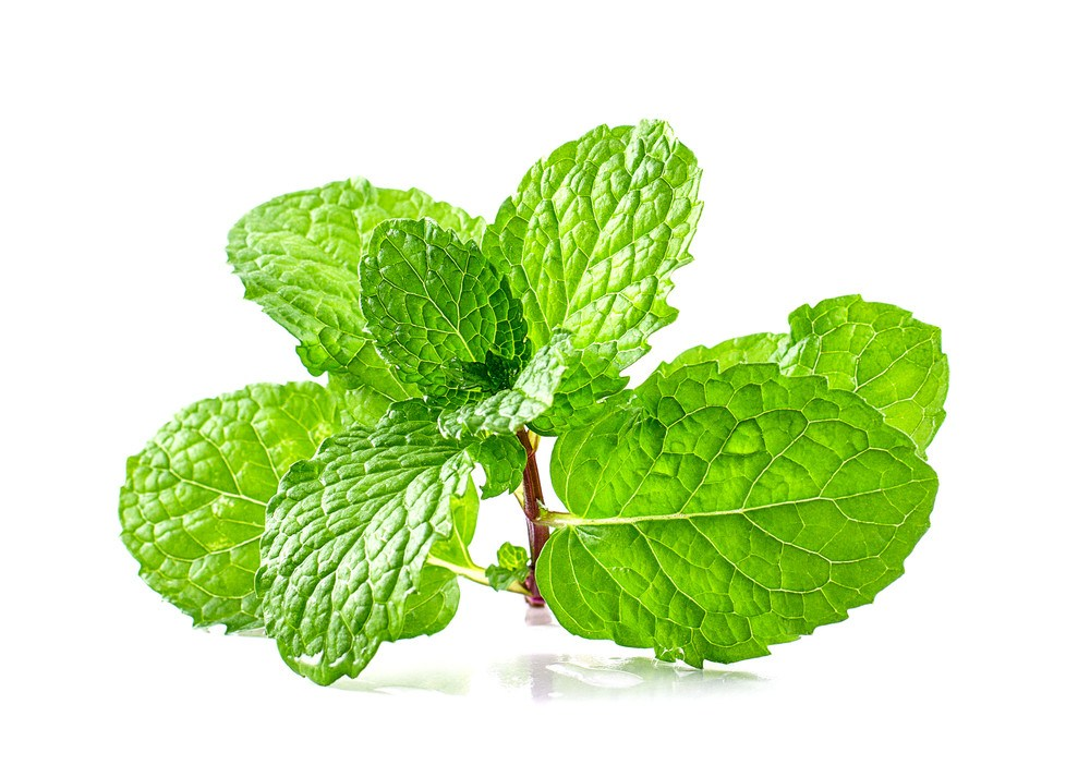 does peppermint oil really keep mice away pestwiki