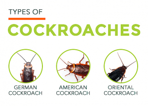 Types of roaches picture.