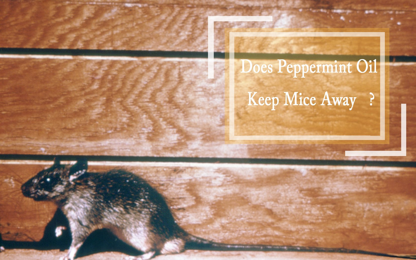 Does Peppermint Oil Keep Mice Away?
