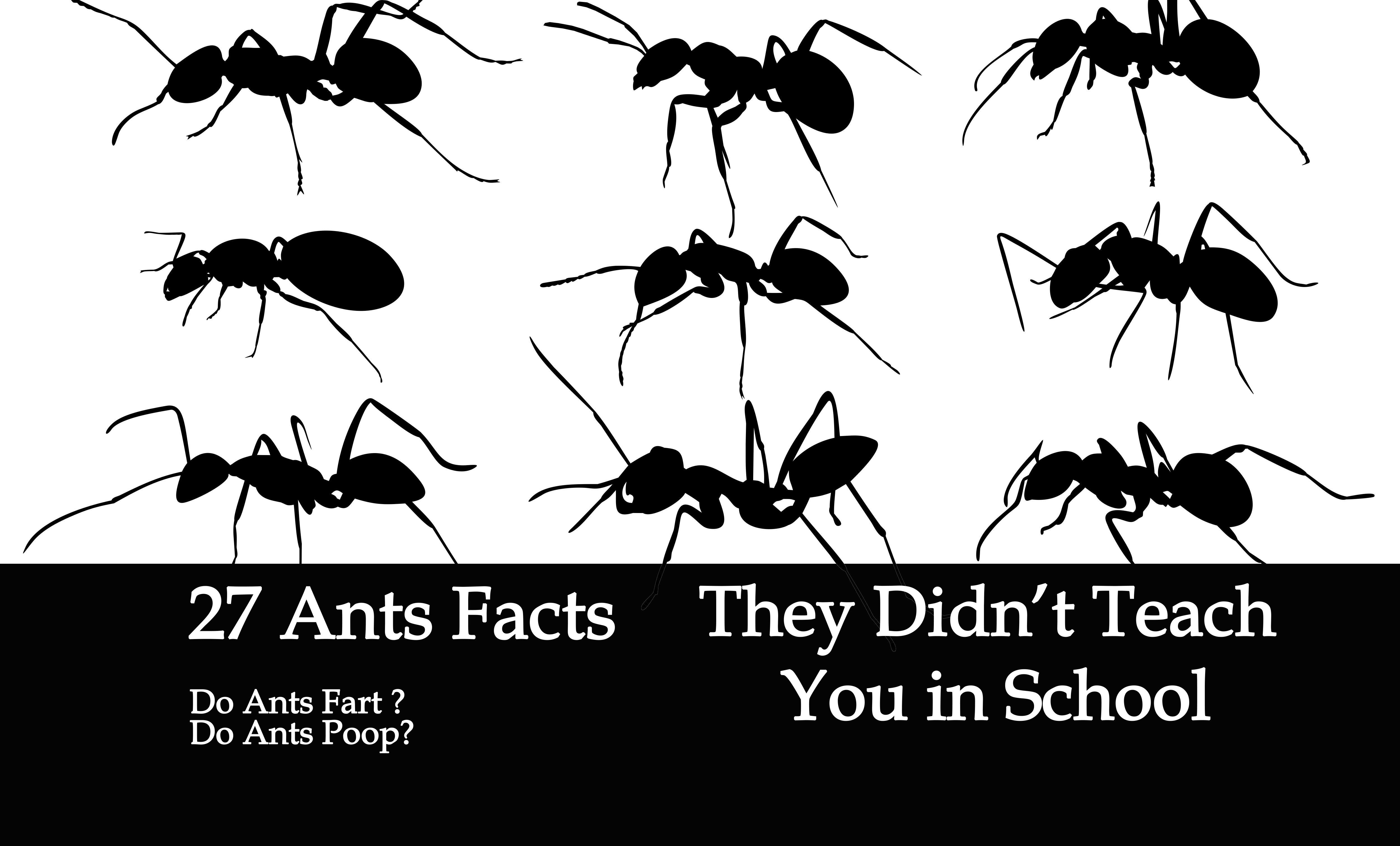 27 ants facts