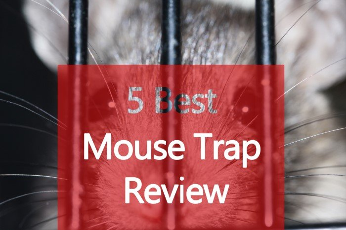 best mouse trap