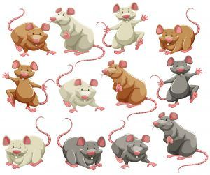 Mouse and rat in different colors.