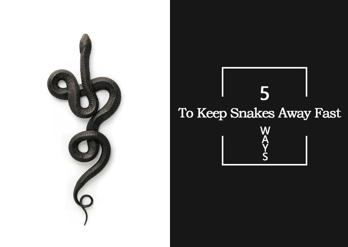 TO KEEP SNAKES AWAY FAST