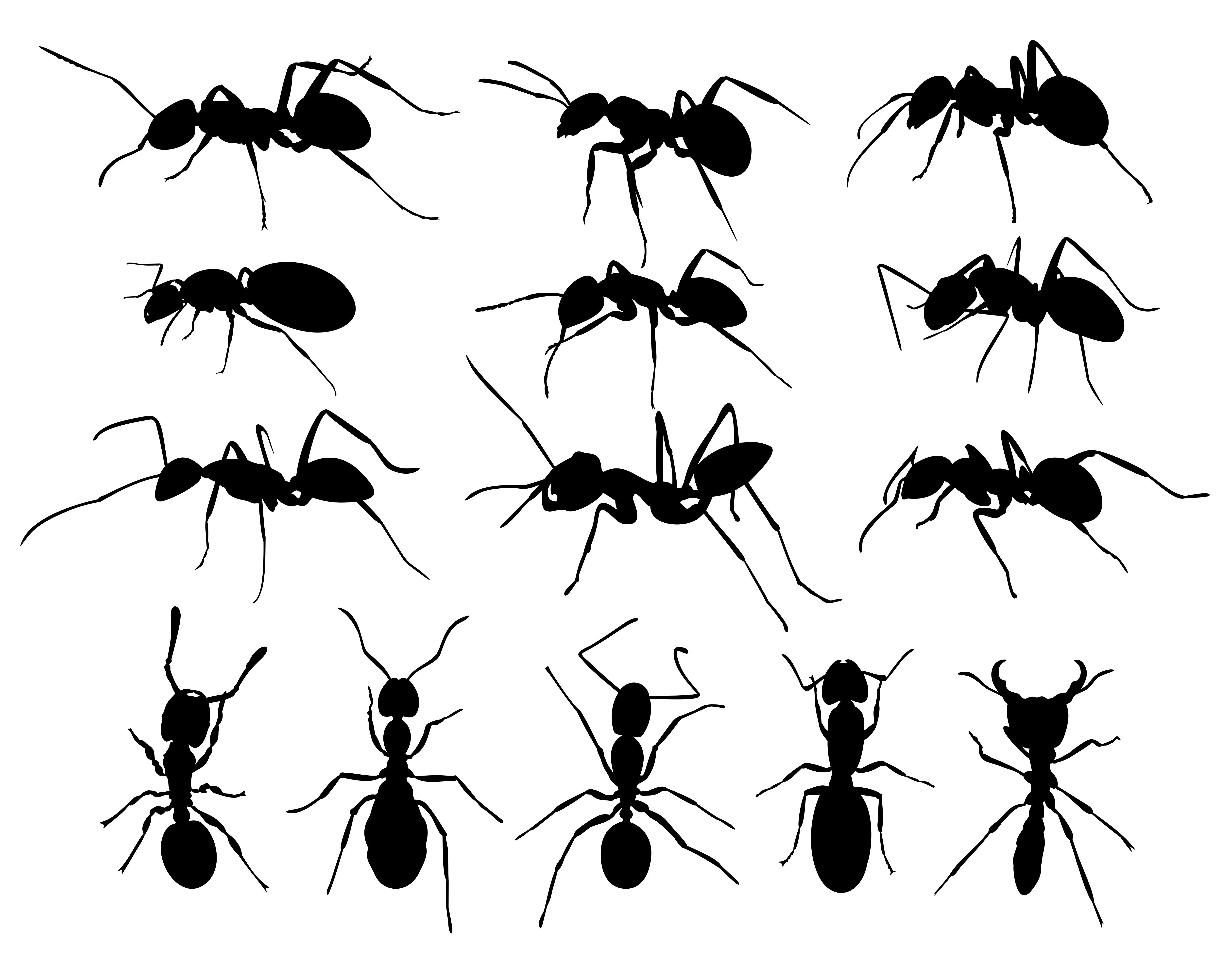 27 Ants Facts They Didn\'t Teach You in School - PestWiki