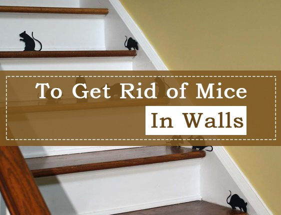 To Get Rid of Mice