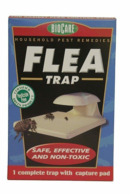 top flea trap