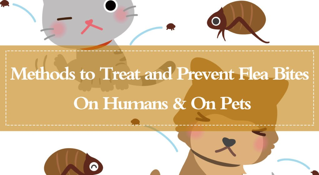 to Treat and Prevent Flea Bites