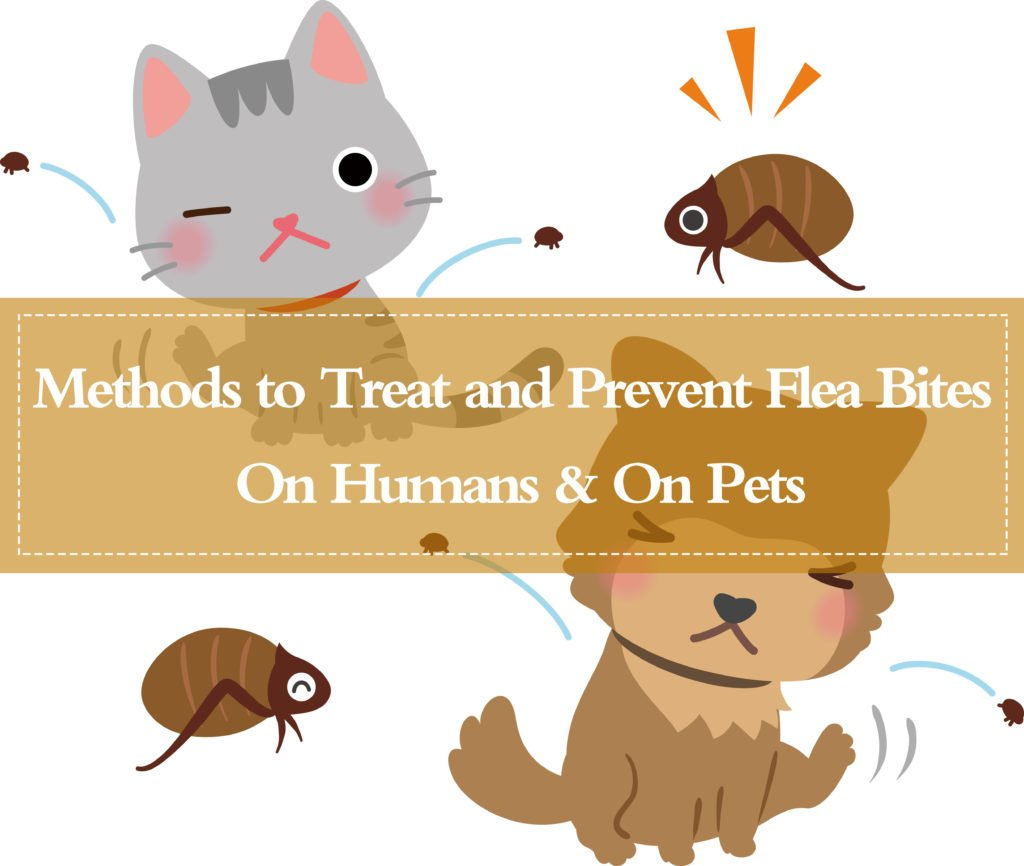 15 Powerful Ways to Get Rid of Flea Bites on Pets (Even on