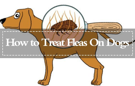 Treat Fleas On Dogs