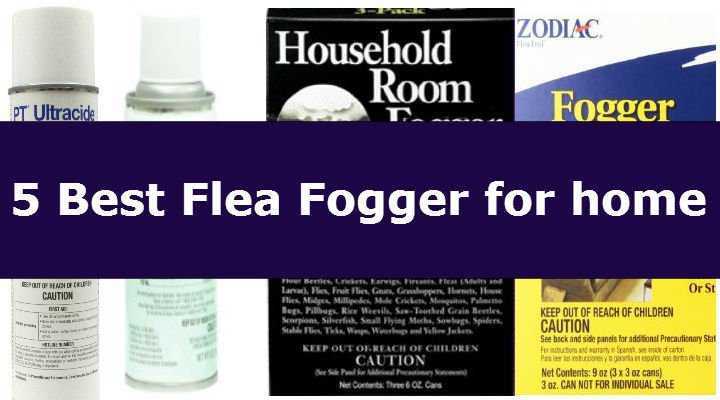 5 best flea bombs u0026 how to use it the right way