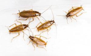 Baby Roaches (Pictures): 12 Simple Ways to Get Rid of It for
