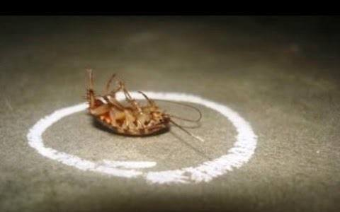 Borax For Roaches 3 Simple Steps To Kill Roaches Fast