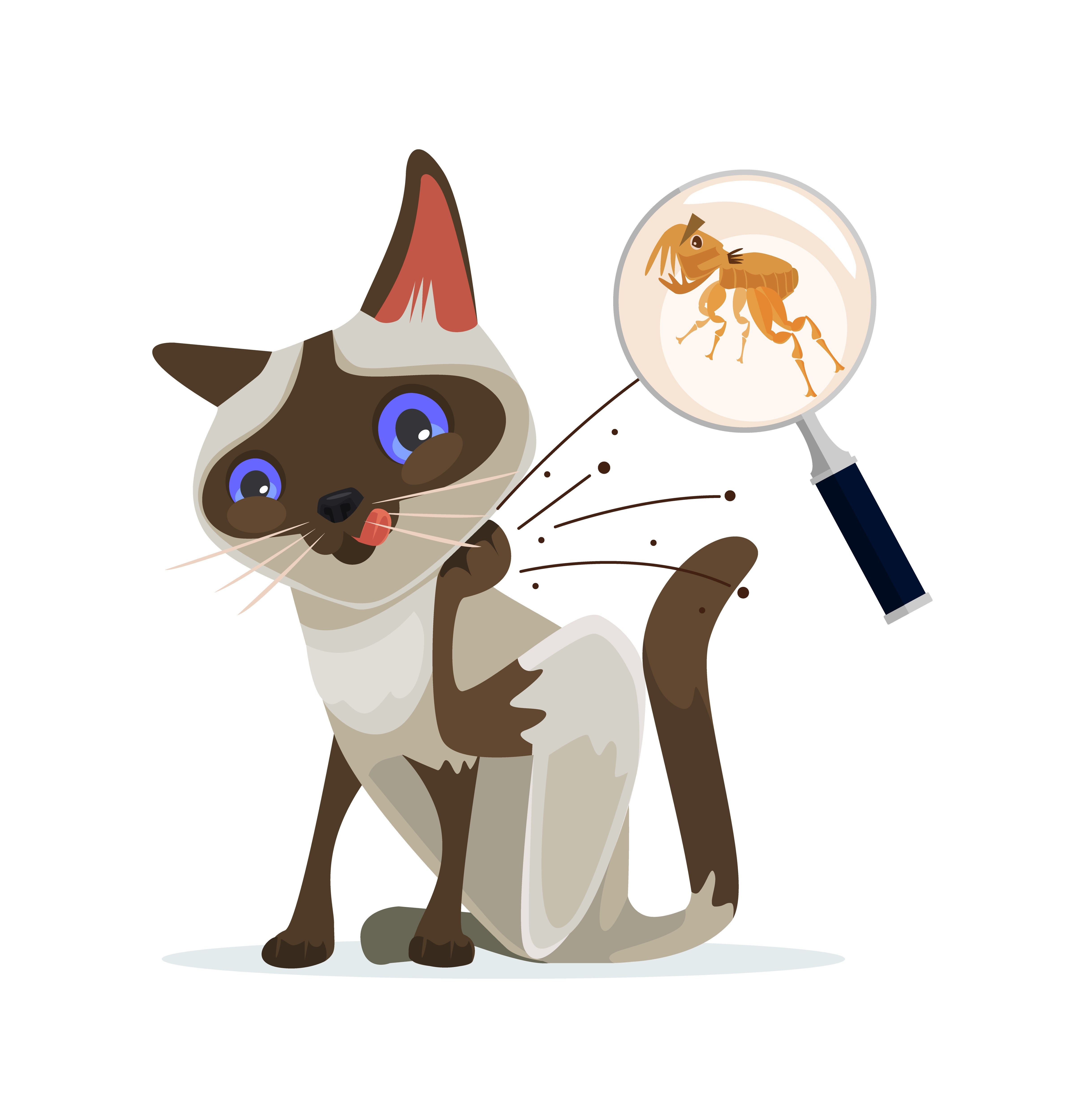 Cat character scratches fleas off on white background.