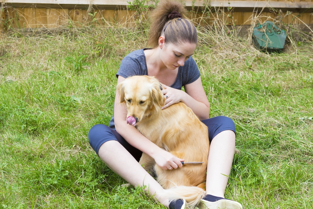 Attractive girl scratching retriever dog with comb outdoors.
