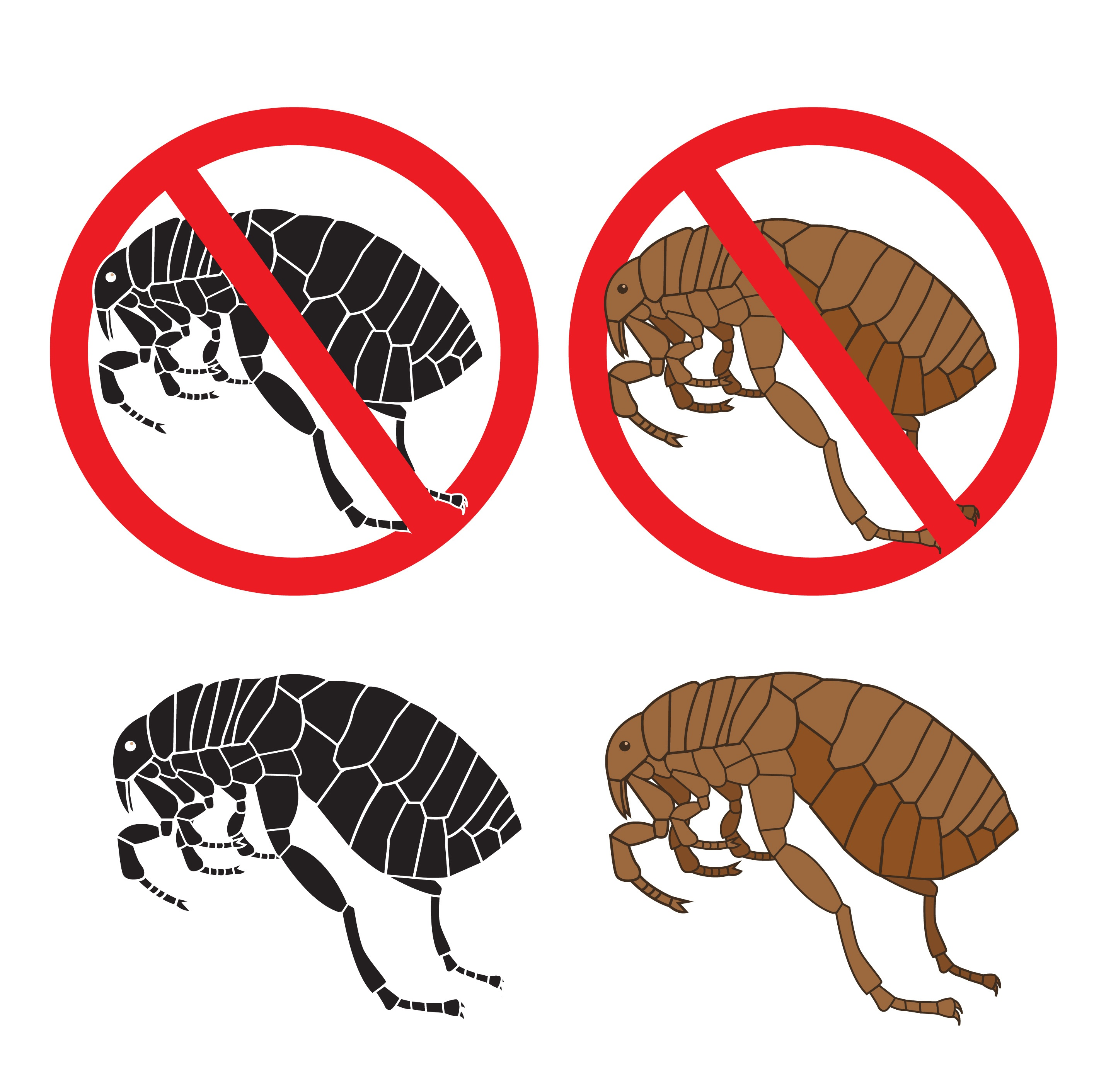 Flea warning signs on white background.