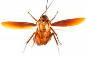 4 Killer Methods to Get Rid of German Cockroaches: Which ...