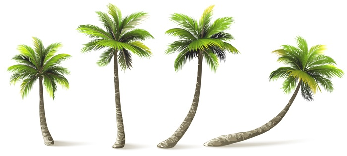 Palm trees with shadow isolated on white.