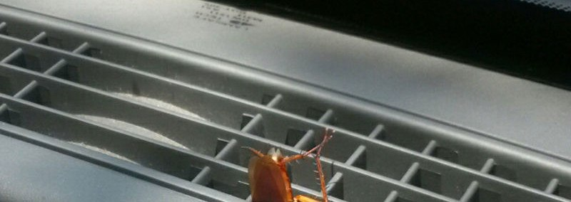 Cockroach in car.