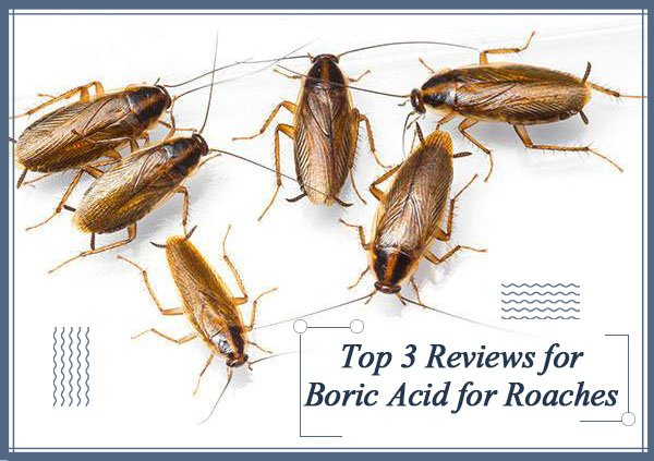 Reviews for Boric Acid for Roaches