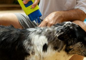 A man is pouring shampoo on dog.