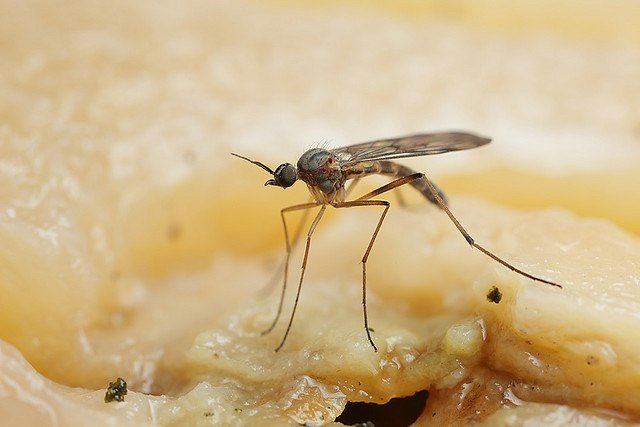 4 Fast Ways to Treat Gnat Bites & How to Prevent Infection - Pest Wiki