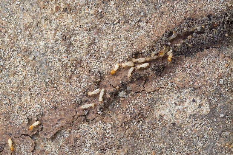 Termites are making their mud tubes.