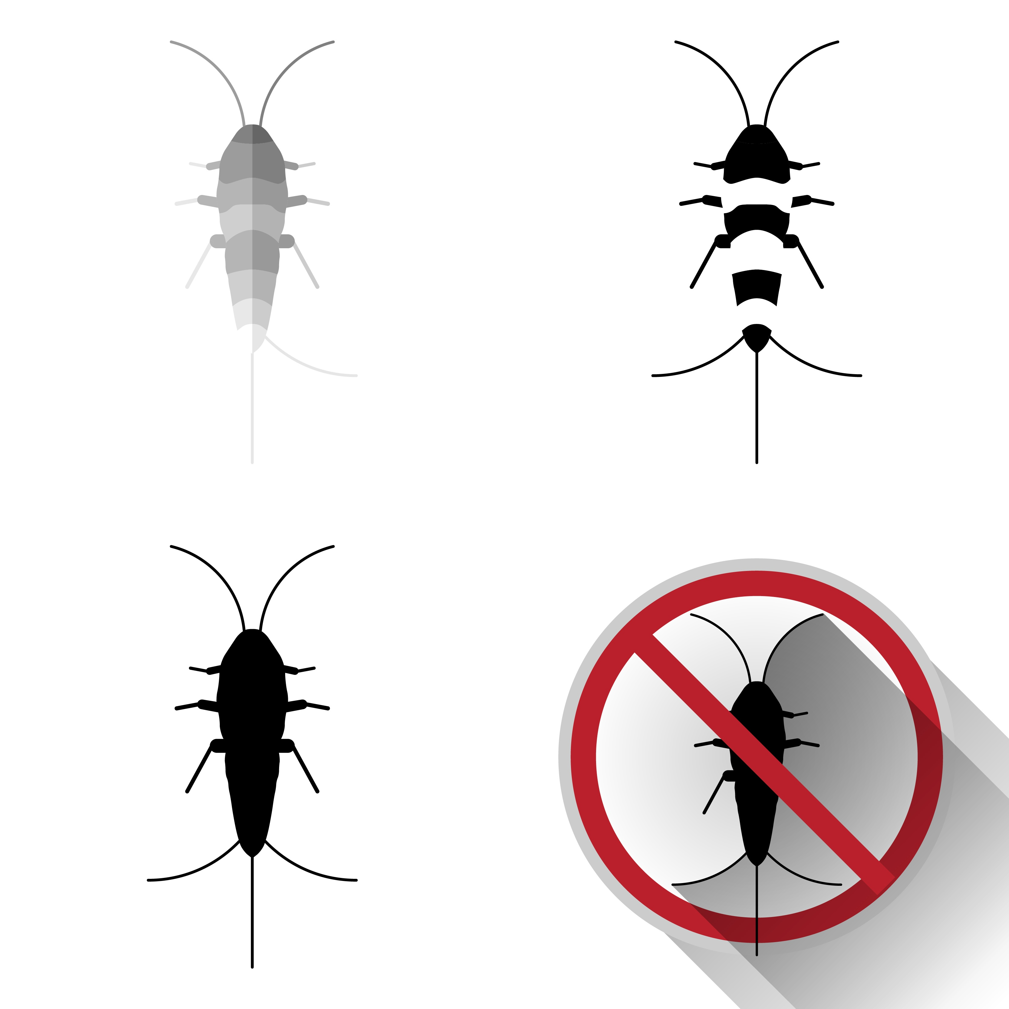 Silverfish 101: 8 Interesting Facts & 4 Things That Kill