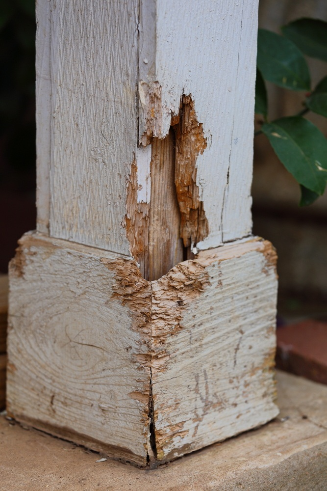 Termite damage on wooden fundation.