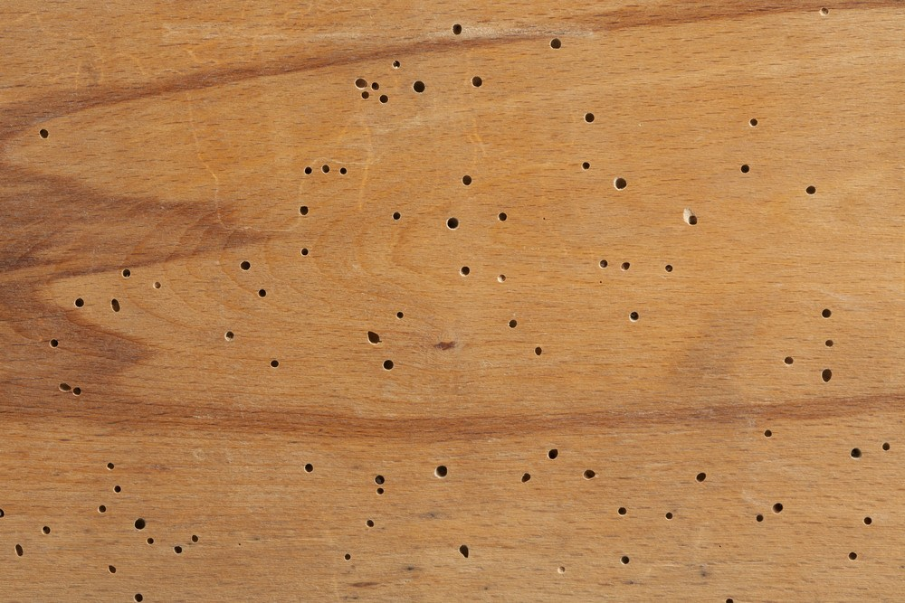 Texture of termite damaged wood with termite holes.