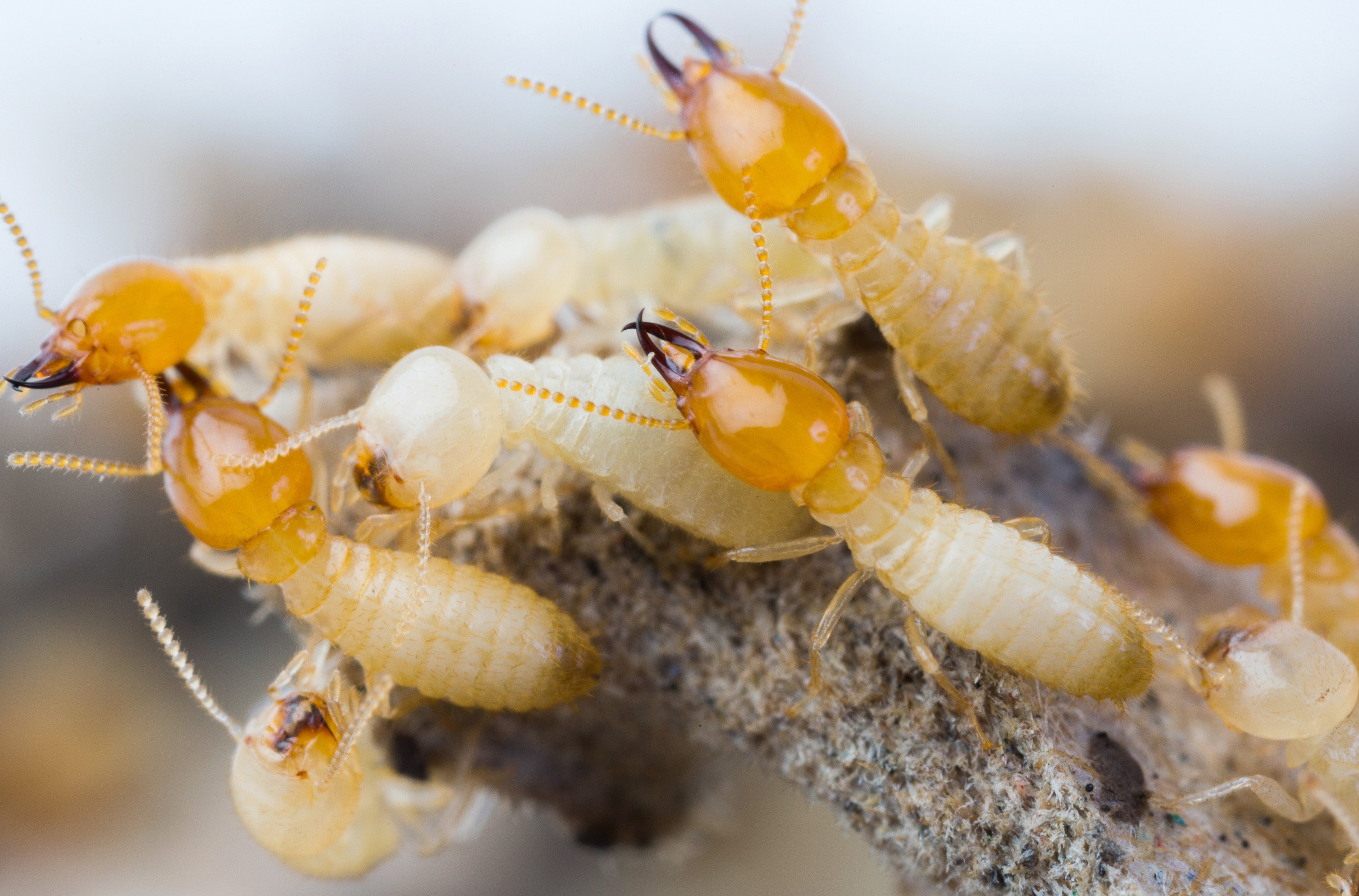 Termites together outside.