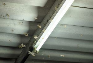 Termite crowd flying around lamp lighting front house in damp weather.