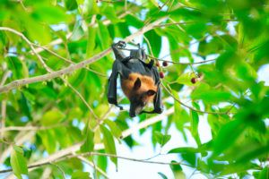 Bat hanging on a tree branch.