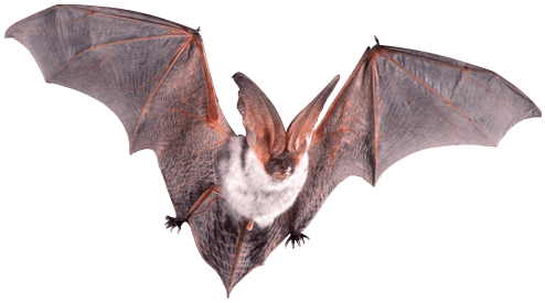 How To Get Rid Of Bats Inside And Outside Your Home