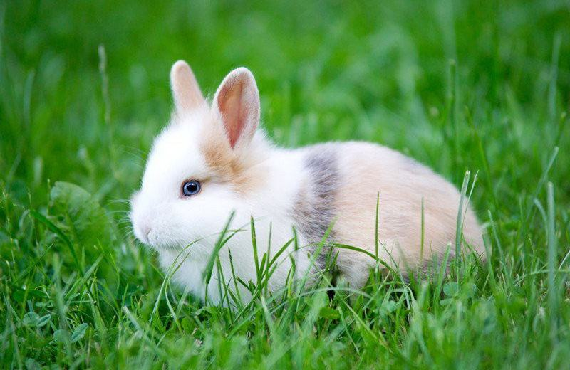 Charmant Rabbit Outside In Grass.