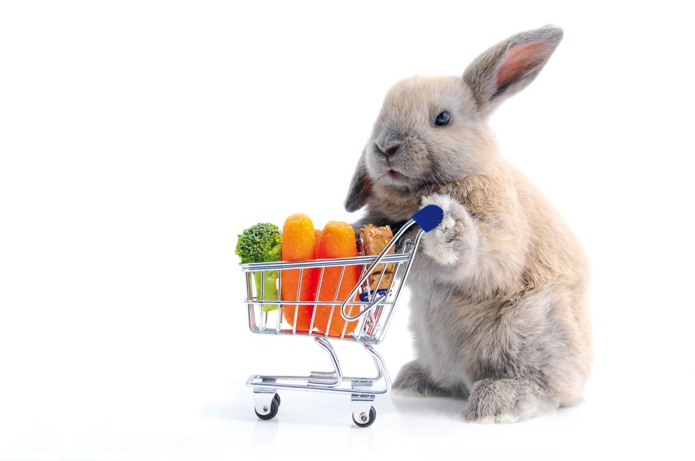 Cute bunny shopping for his favorite snacks with shopping cart, isolated on white.