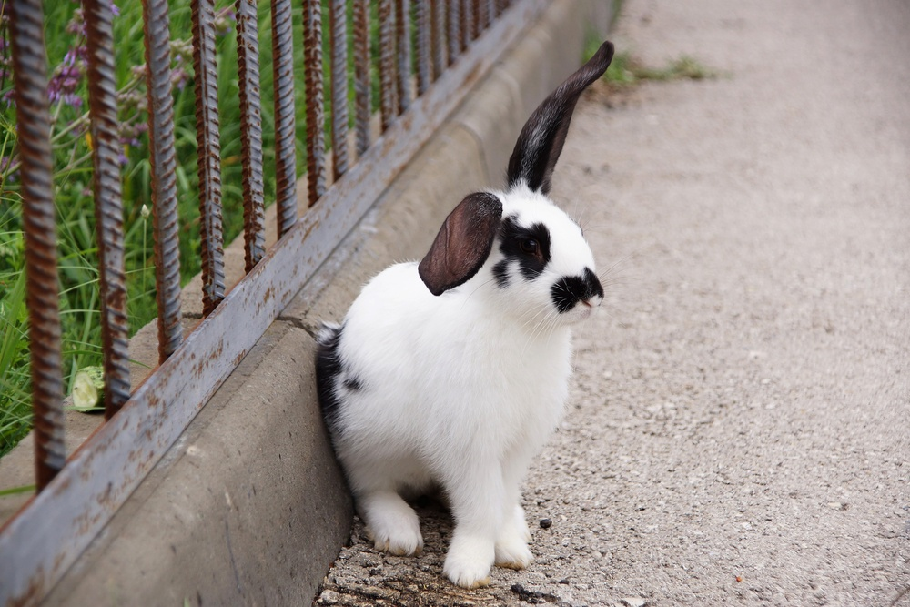 3+5 Methods to Get Rid of Rabbits Quickly (and Effectively ...