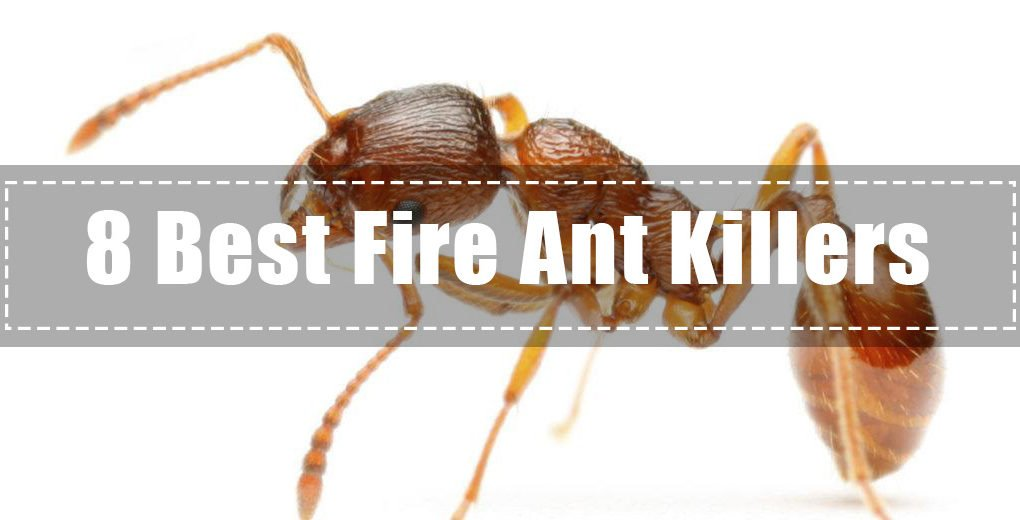 8 Best Fire Ant Killers