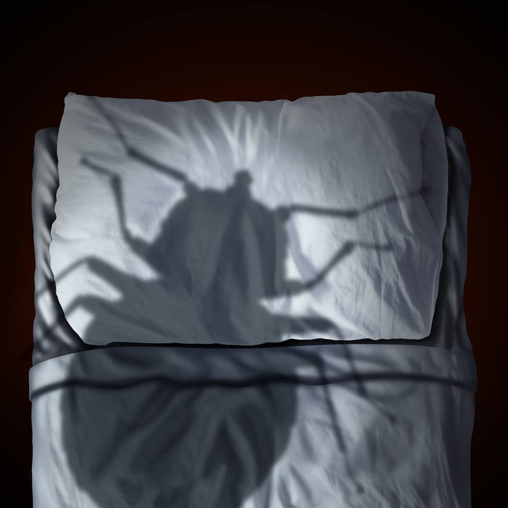 4 natural and 4 professional ways to get rid of bedbugs (fast