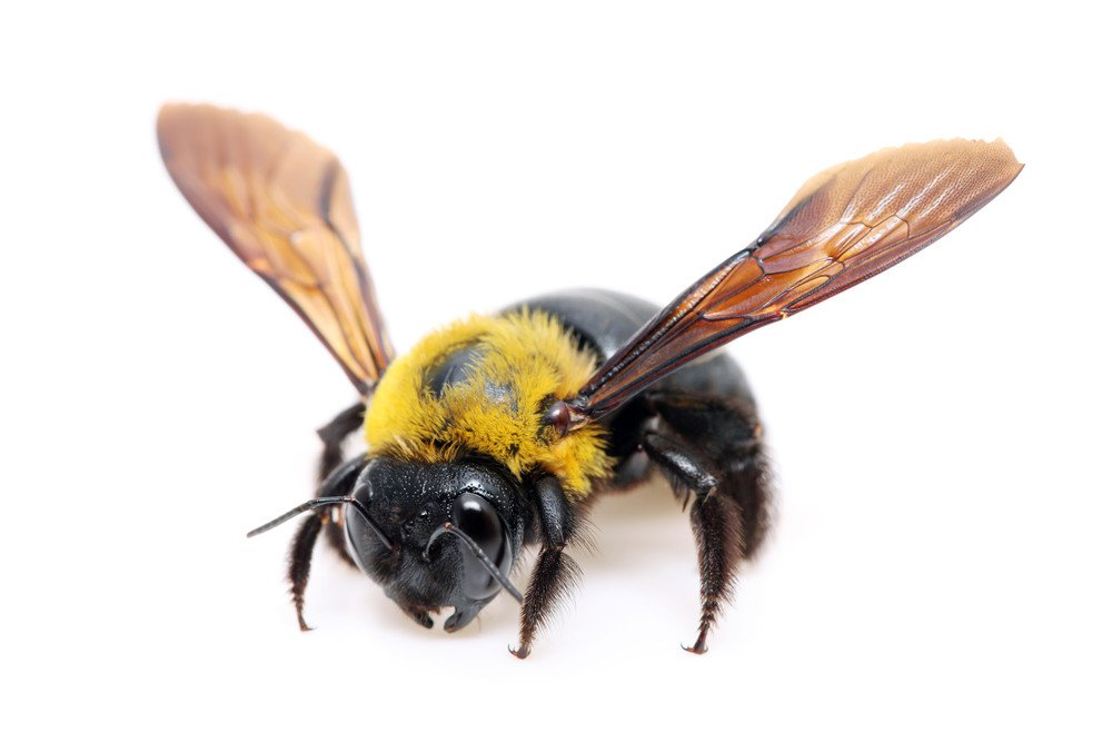 how to build a bumble bee trap