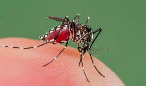 Mosquito is biting human.