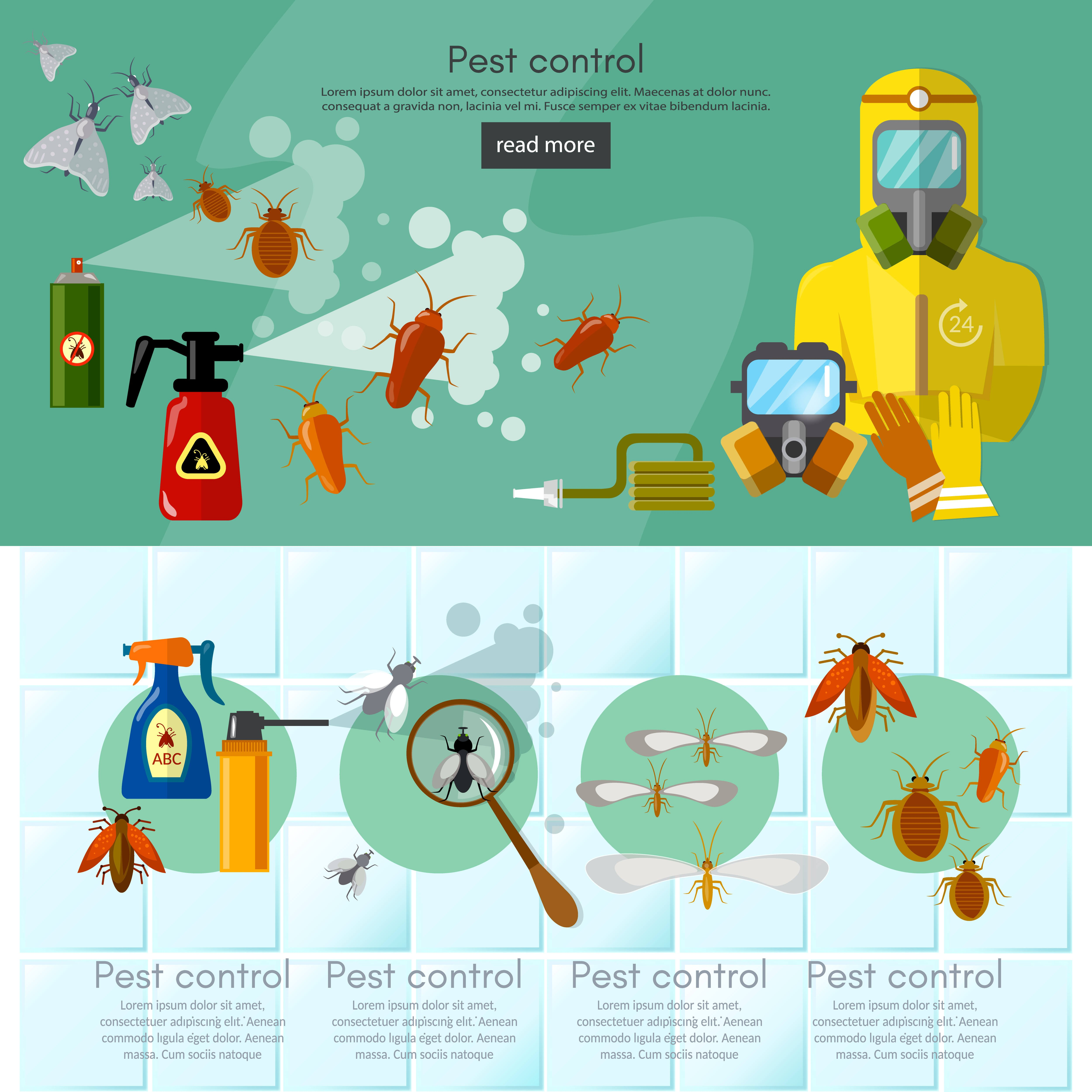 Pest control services infographics banner detecting exterminating insects illustration.