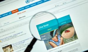 Zika virus key facts on internet under magnifying glass. Zika virus is transmitted to people through the bite of an infected mosquito from the Aedes genus.