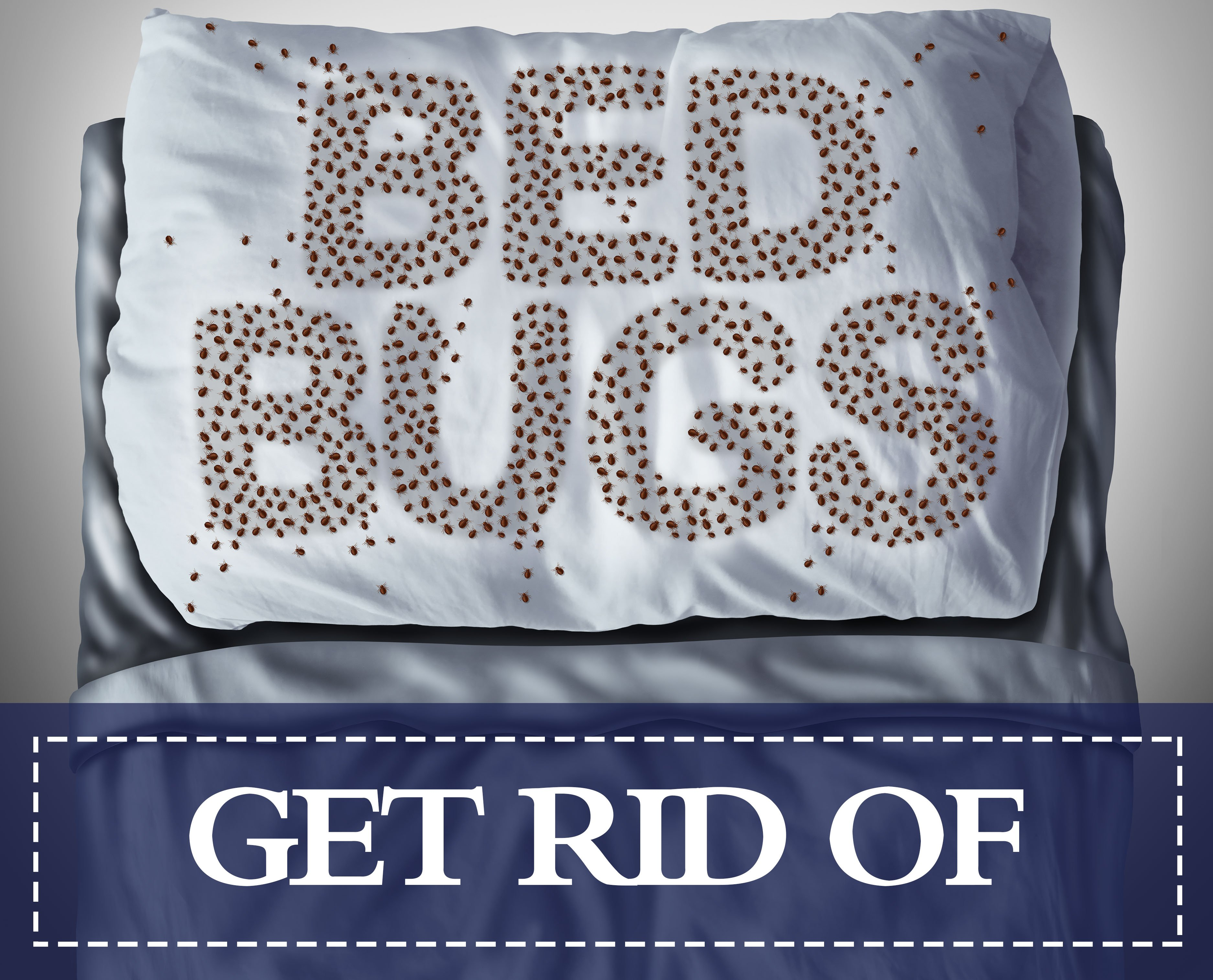 Get Rid of Bedbugs