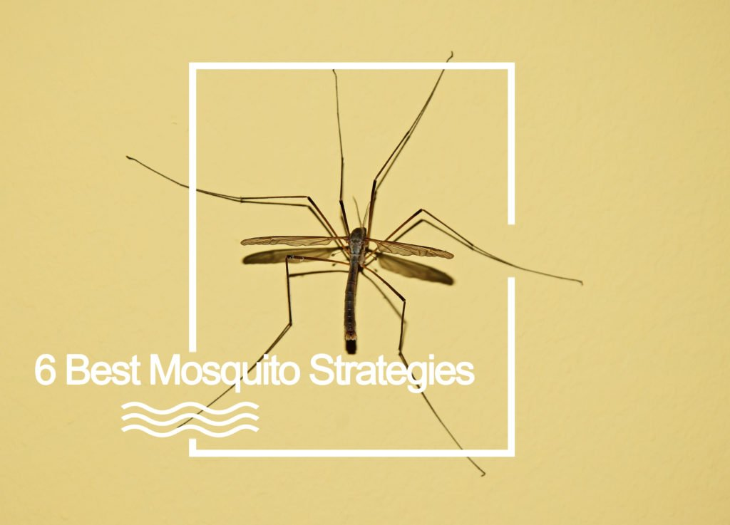 Backyard Mosquito Control Guide: 8 Best Mosquito Yard Sprays
