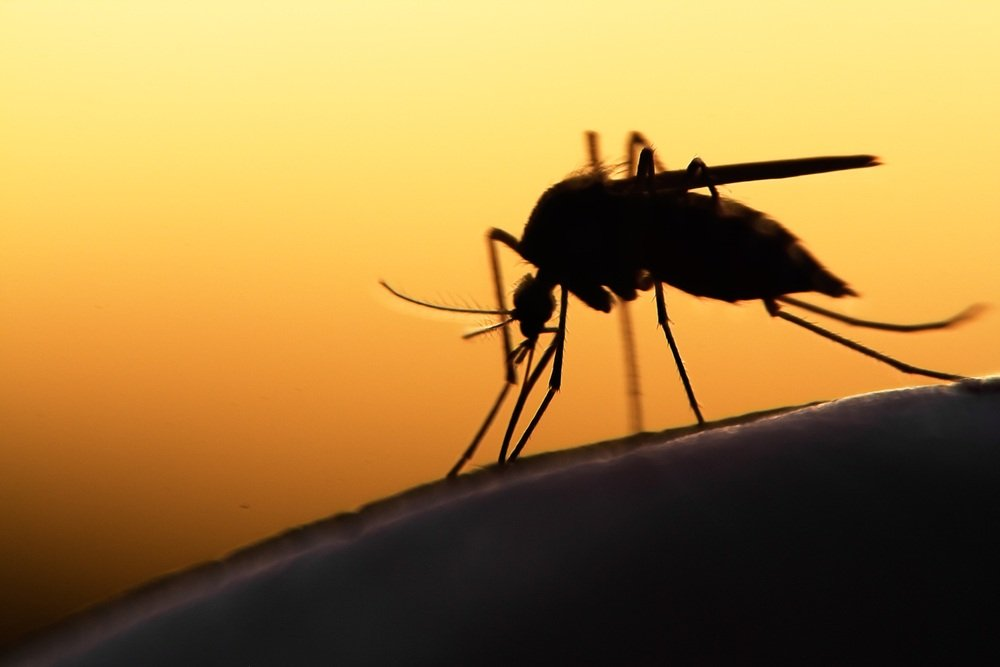 A mosquito on human skin at sunset.