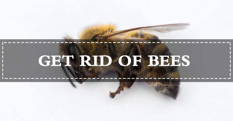 15 SAFE Ways to Get Rid of Bees Naturally (Fast) - Pest Wiki